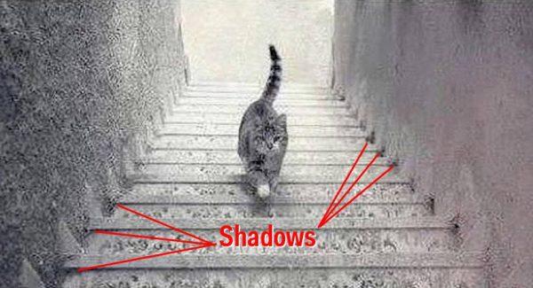 1428744926_shadows-11