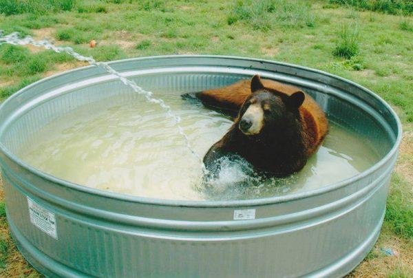 blt-bear-lion-tiger-noahs-ark-rescue-4