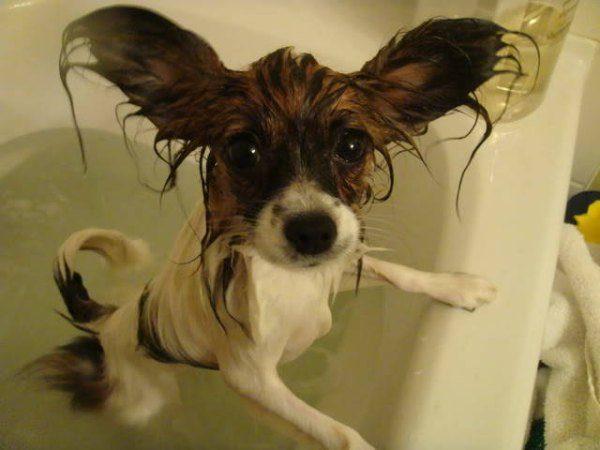 hayvan-banyosu-foto-05