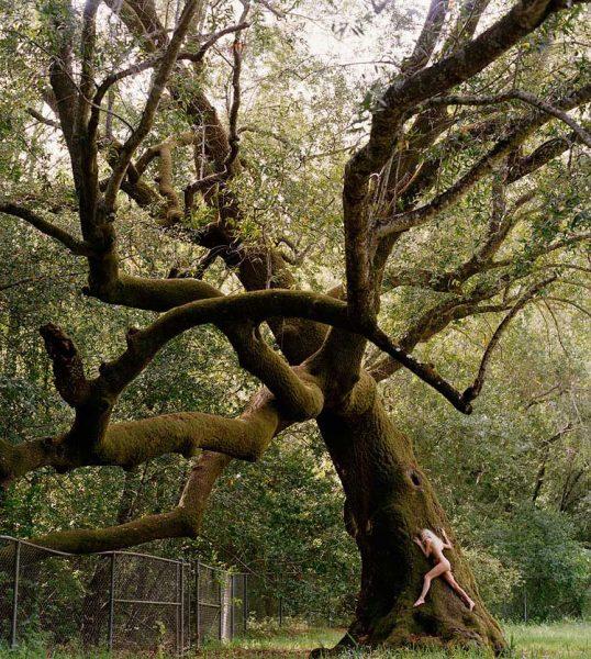 naked-tree1