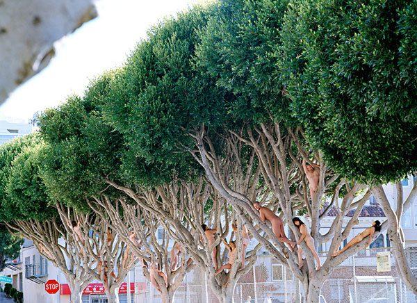 naked-tree8