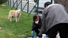 Sokak hayvanlarına mama dağıttılar